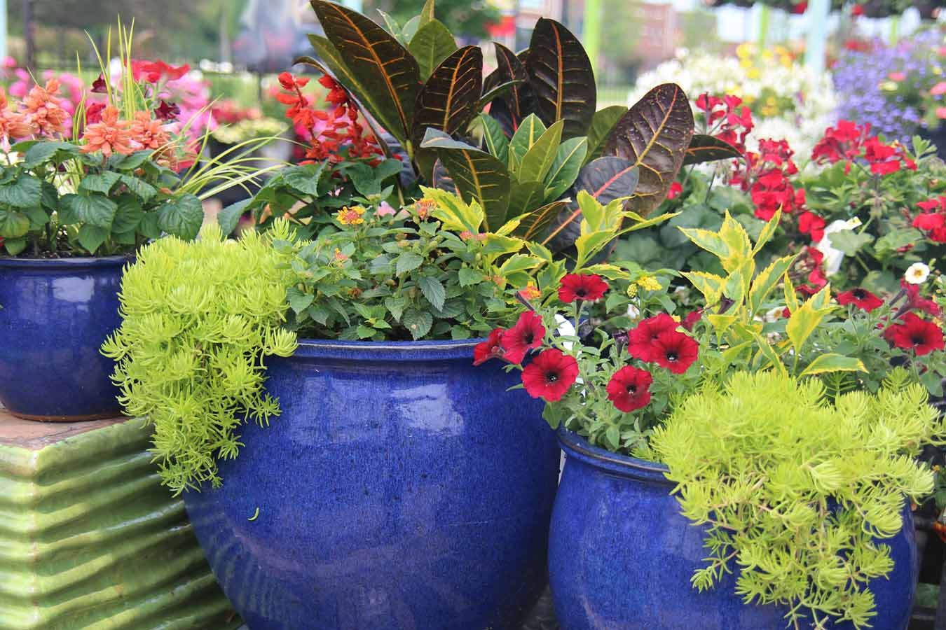 Potted Gardens 12 stunning spring container gardens wende calvert 12 stunning spring container gardens workwithnaturefo